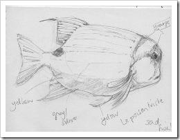 Sad Fish blog