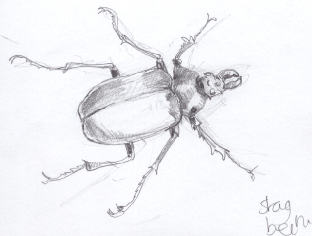 Quick sketch of a stag beetle