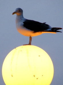 photo of gull on a lamp