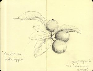 Drawing of apples on tree by Julie Bryce