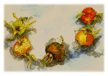 Watercolour painting of rosehips